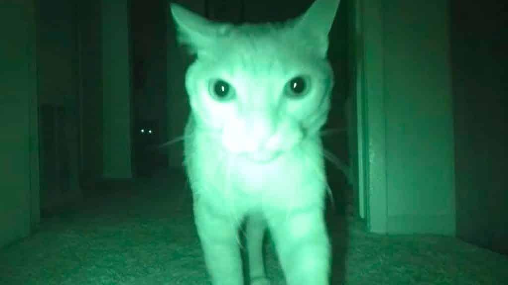 Será que você vive em uma casa assombradm comportamento estranho de animais mundo sombrio • mundo sombrio