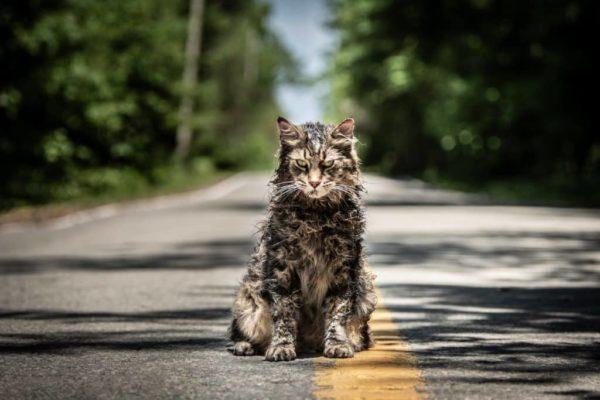 gato-leo-faleceu-cemitério-maldito-mundo-sombrio