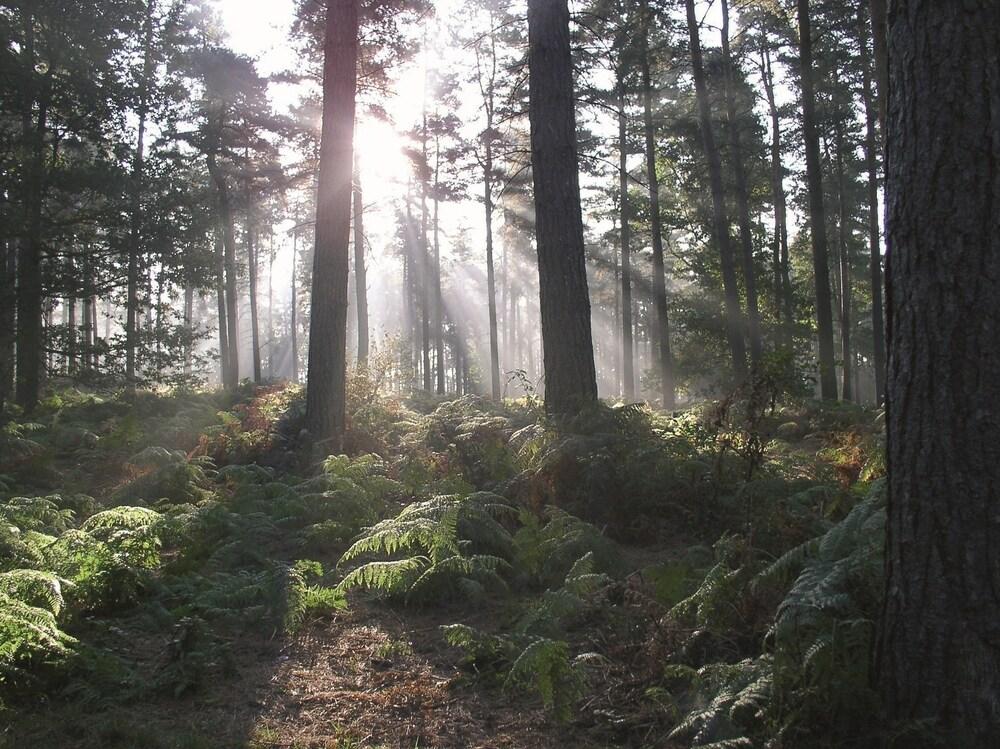 5 Parques Assombrados para Você Visitar nas Férias 4