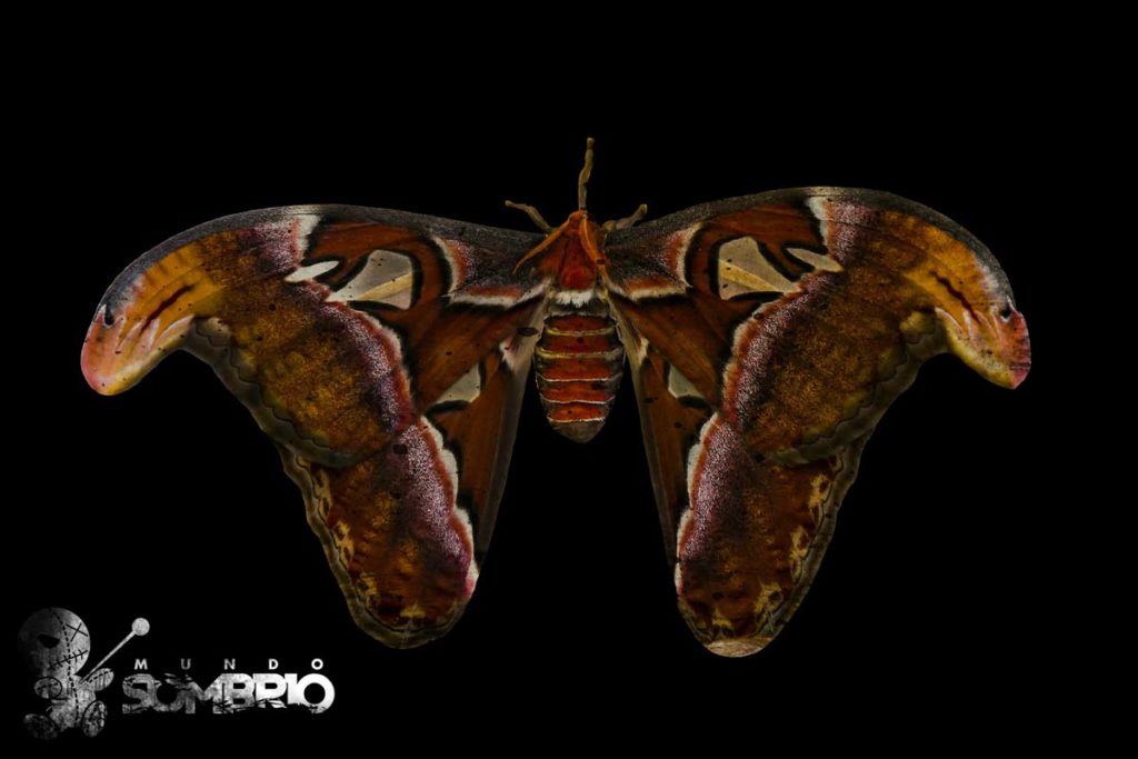 a mulher mariposa história de terror