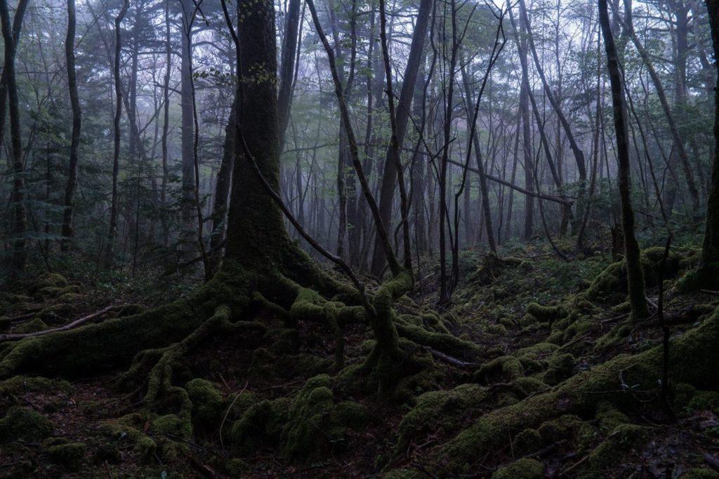Aokigahara 2 a floresta dos suicidas mundo sombrio • mundo sombrio