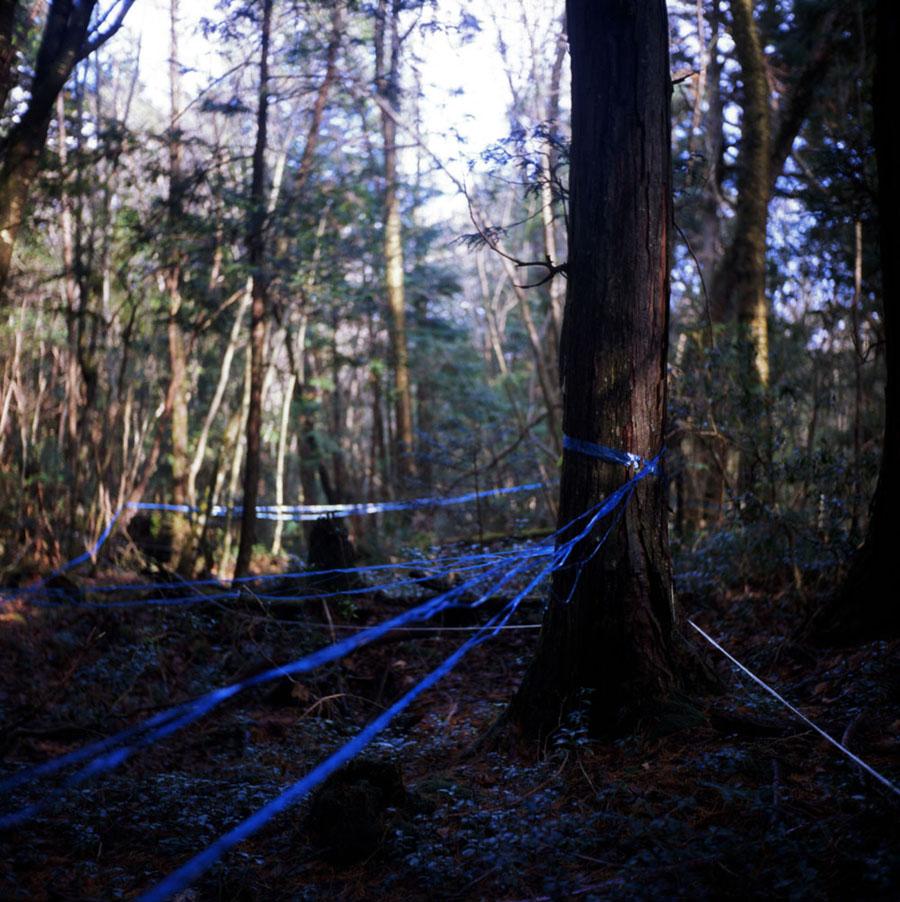 Aokigahara, a floresta dos suicidas mundo sombrio