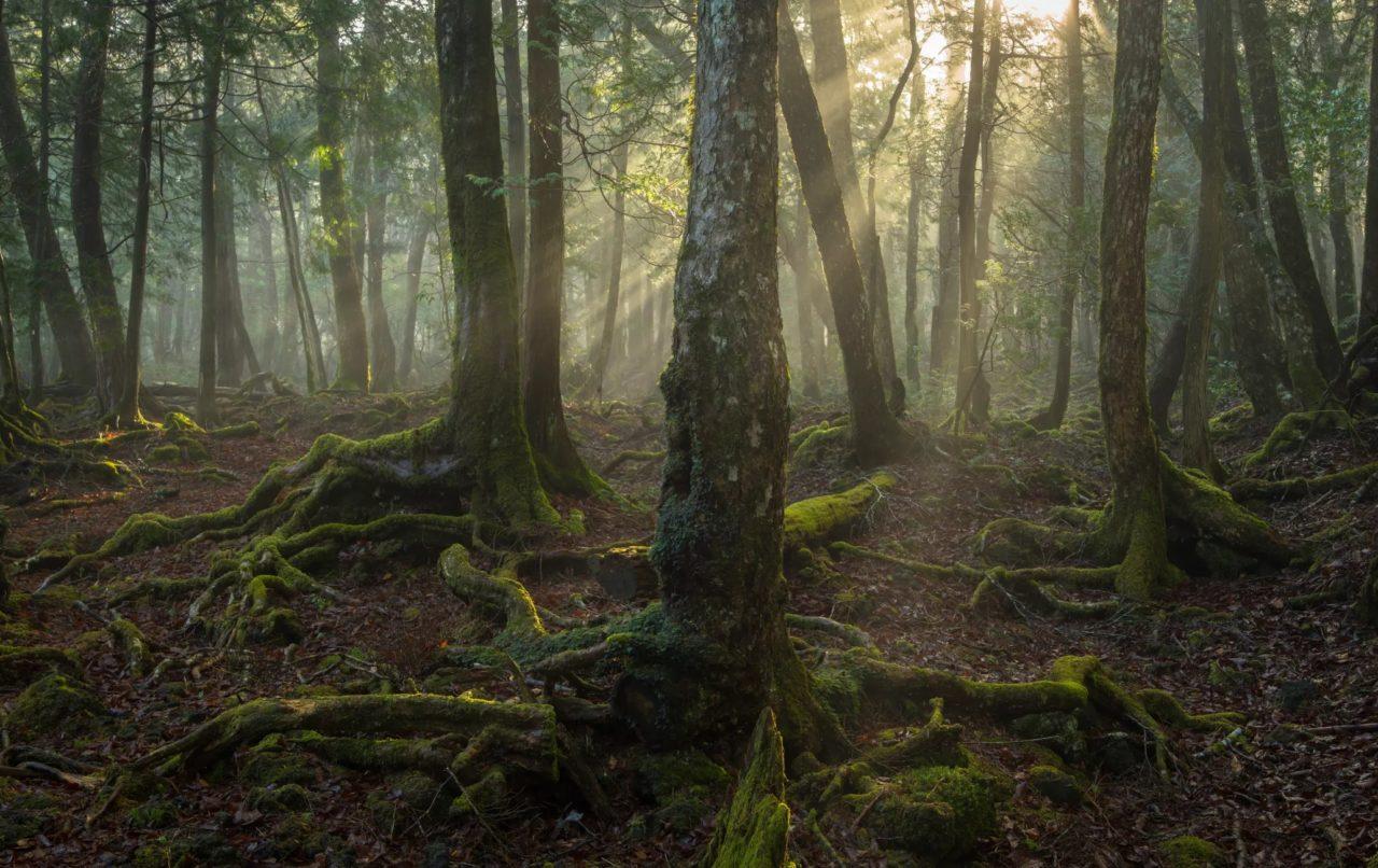aokigahara a floresta dos suicidas mundo sombrio