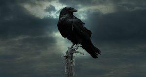 O Corvo [História de Terror]