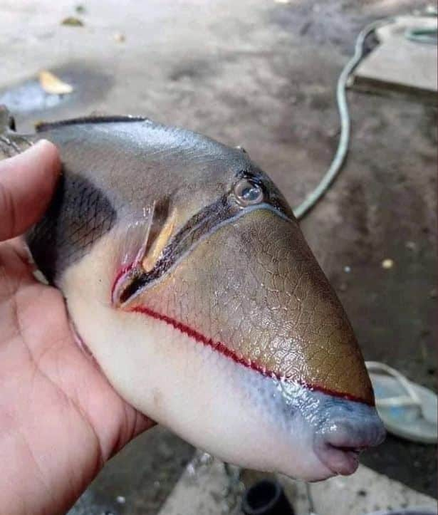 0 pay cen fishteeth 02 • mundo sombrio