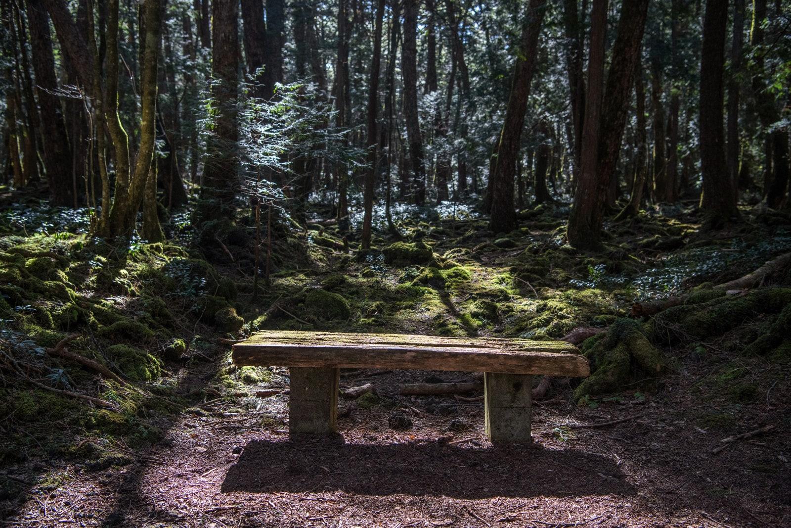 Floresta aokigahara lugares mais assombrados do mundo • mundo sombrio