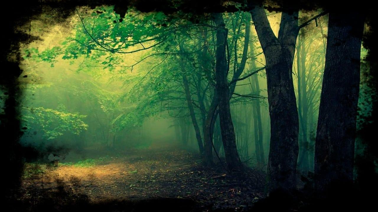 Hoia Baciu A Floresta mais Mal-Assombrada do Mundo Mundo Sombrio