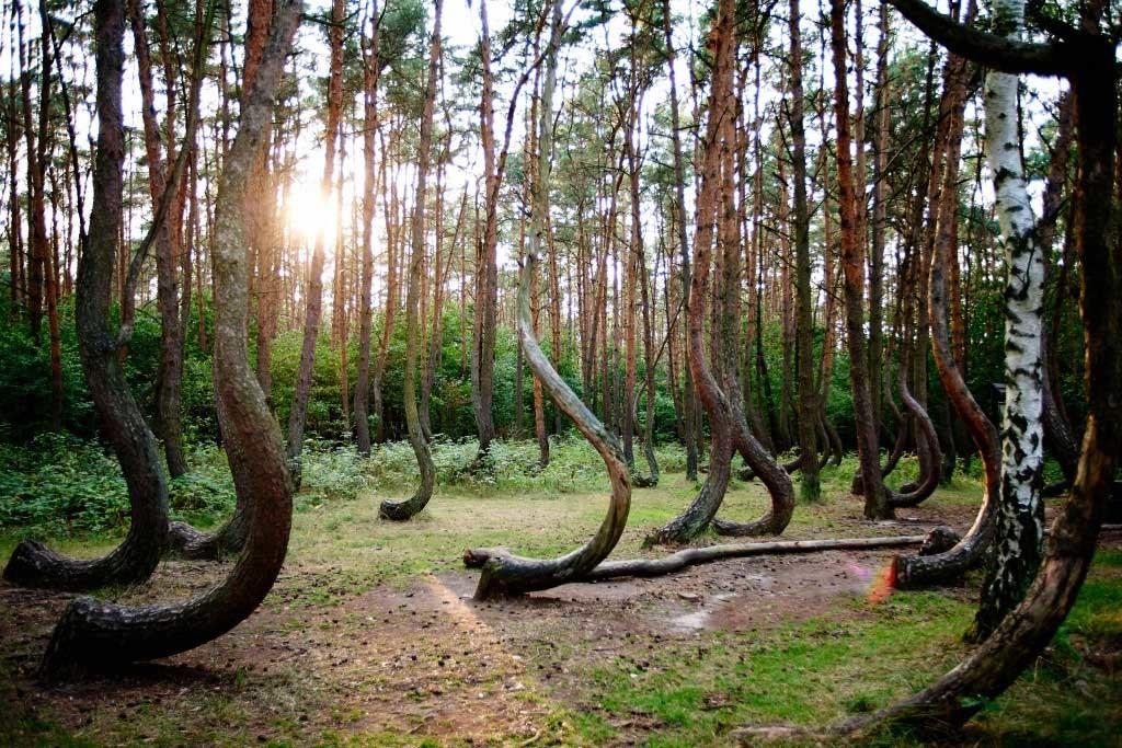 Hoia baciu a floresta mais mal assombrada do mundo mundo sombrio arvores • mundo sombrio