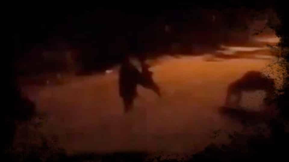 Câmera de segurança mostra humanoide Sinistro Andando Como Um Caranguejo e Assustando Cães