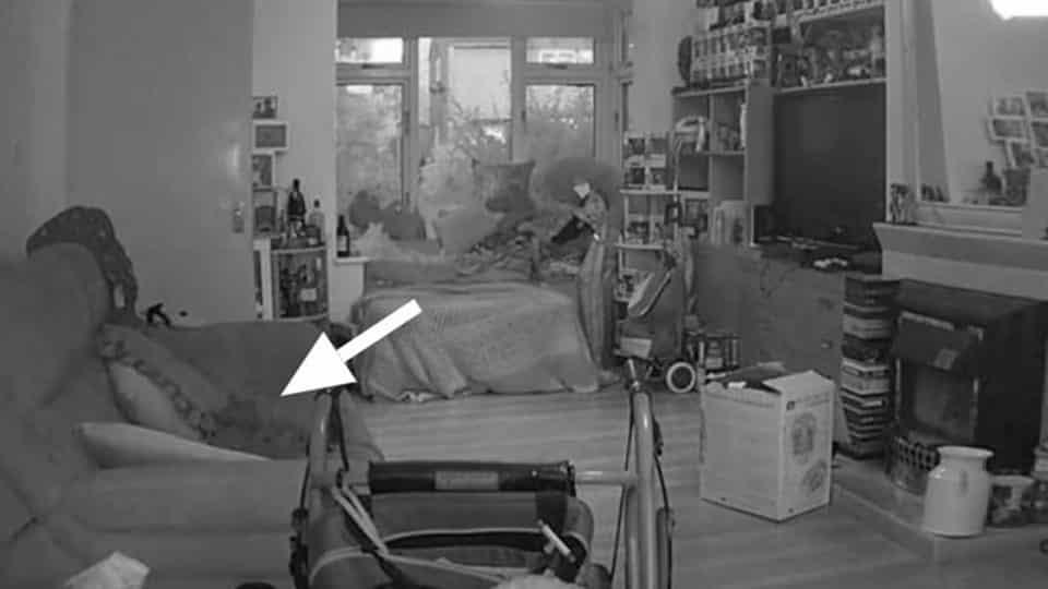 Gato morto se materializa em sofá e câmera de segurança capta o momento