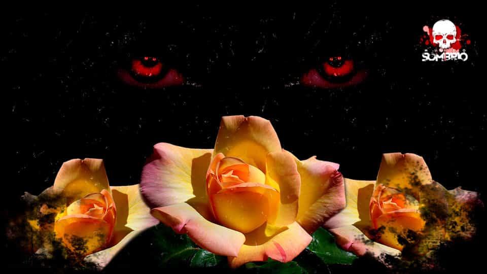 o berro da roseira história de terror