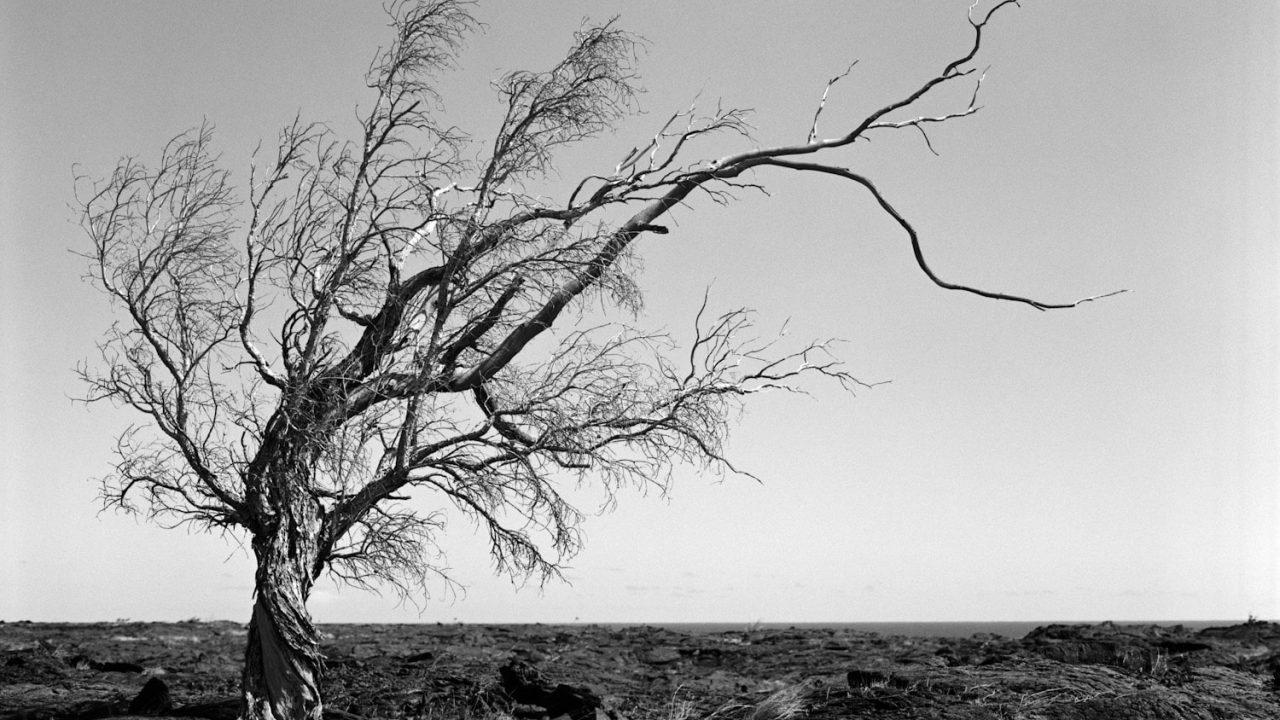 a-árvore-relato-sobrenatural-mundo-sombrio